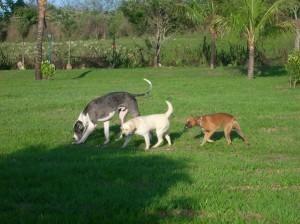 Recanto Cãopestre - Recreação e diversão para seu cão em Campinas