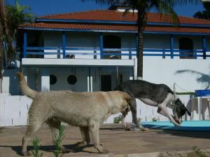 Recanto Cãopestre - Hotel para cães - Campinas