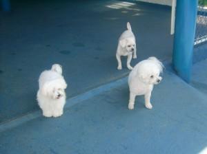 Oferecemos serviços de creche, para cuidar de seu cão durante o dia