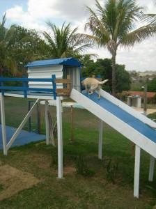 Hotel para cães Recanto Campestre - Um hotel bom pra cachorro!