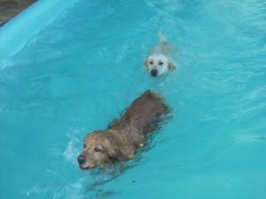 Recanto Cãopestre - Hotel para Cães - Hospedagem e mais em Campinas