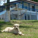 Recanto Cãopestre - Hospedagem de cães Campinas
