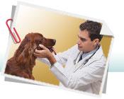 Muito importante vacinar seu cão na hora certa